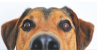 Dog Reggo Do It Now